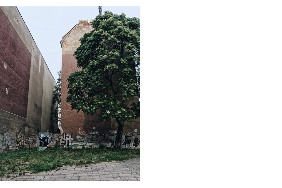 Berlin Baum