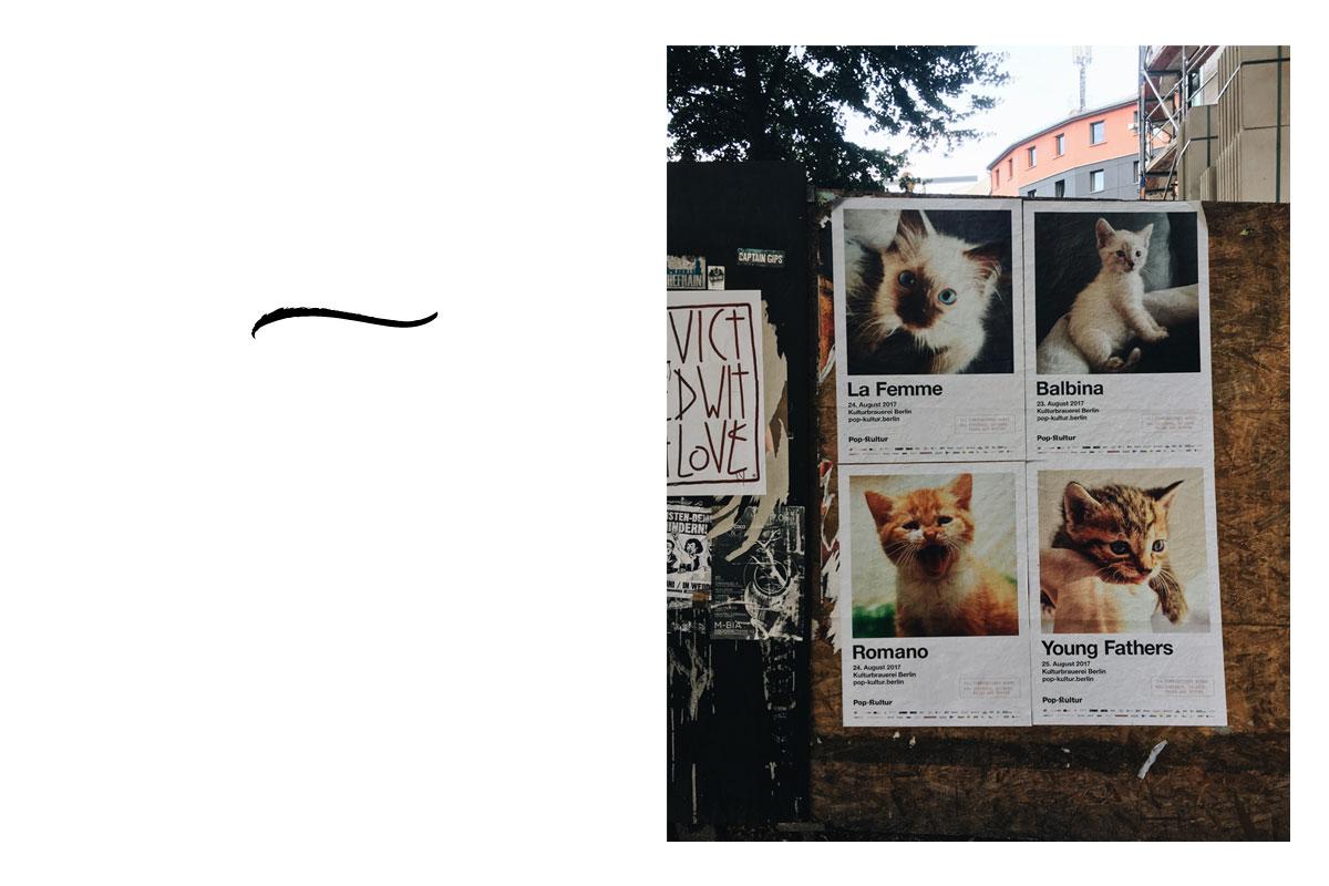 Katzen Popkultur Berlin