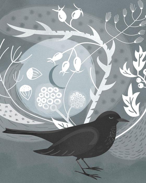 BlBlackbird Illustration Catriona