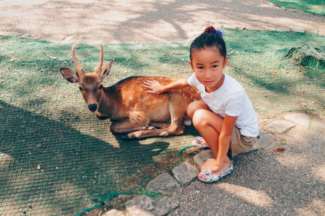 Nara Bambi