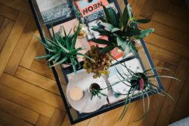 Dito Ikea Pflanzen