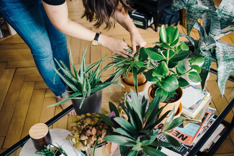 Dito Ikea Pflanzenvariationen